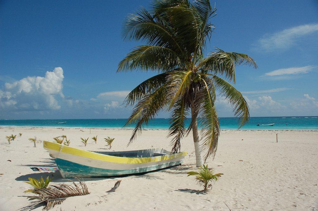 Photo d'une chaloupe sous un palmier à la plage